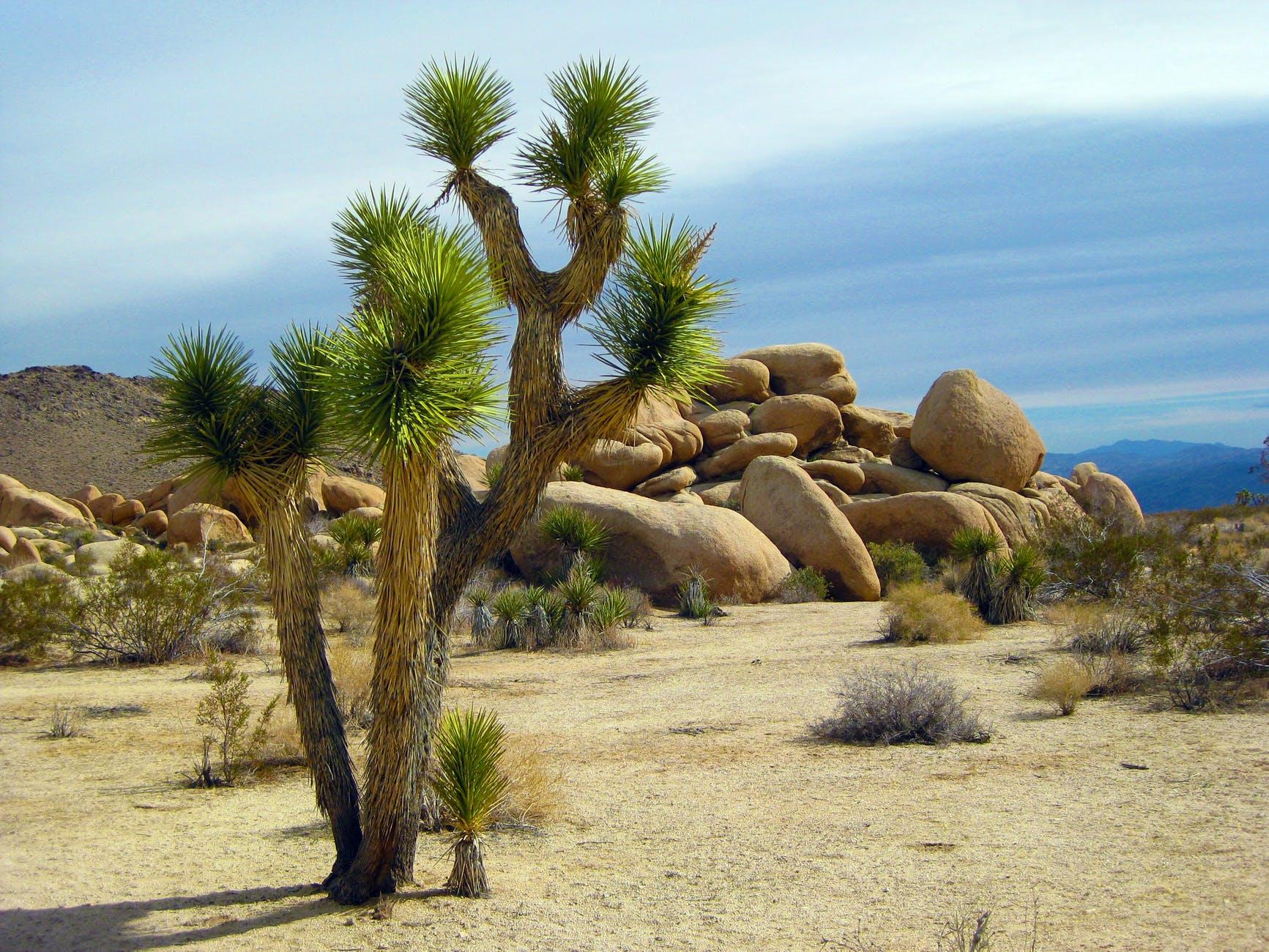 america arid bushes california